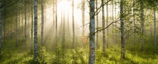 Birch Trees What is Forest Bathing? Eminence Organic Skincare